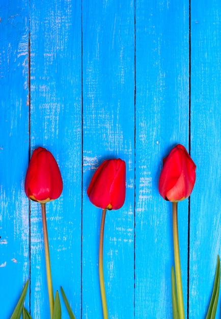 Tres tulipanes rojos en flor Foto Premium