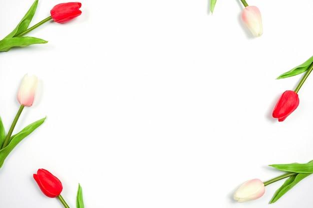Tulipán Hermoso De La Primavera En El Fondo Blanco Flores
