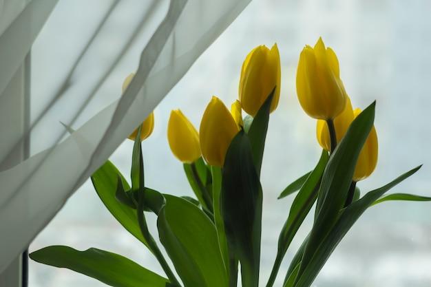 Tulipanes Amarillos Sobre Un Fondo Blanco Ramo De Flores
