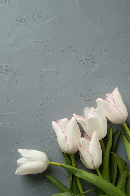 Tulipanes Foto Premium