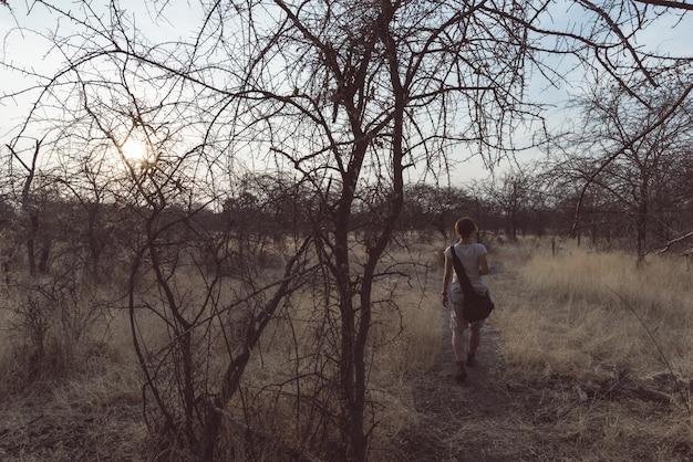 Turista caminando en el bosque de arbustos y acacia al atardecer, bushmandland, namibia. Foto Premium