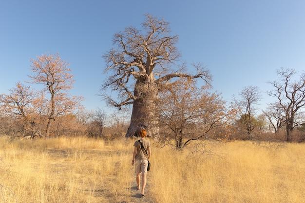 Turista caminando en la sabana africana hacia la enorme planta de baobab Foto Premium