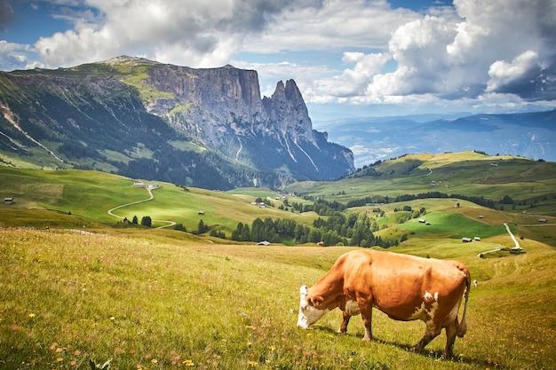 Vaca marrón pastando en un prado verde rodeado por altas montañas rocosas Foto gratis