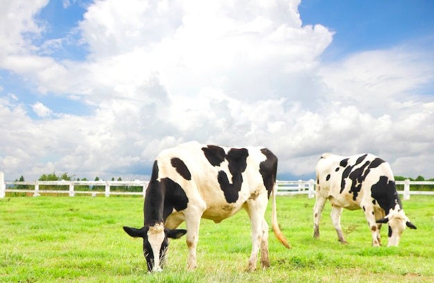 Cabeza De Vaca Vectores Fotos De Stock Y Psd Gratis