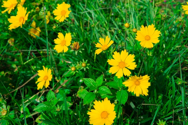 Varias Flores Silvestres De Primavera Amarilla En El Jardin