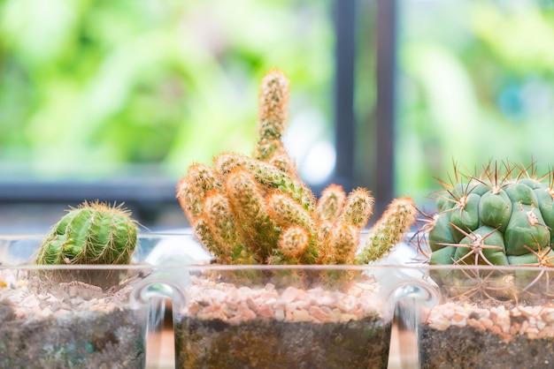 Vaso cactus decoración con sala vacía Foto gratis
