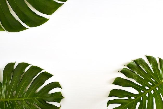 Verano gran hoja de monstera tropical verde sobre fondo blanco ...