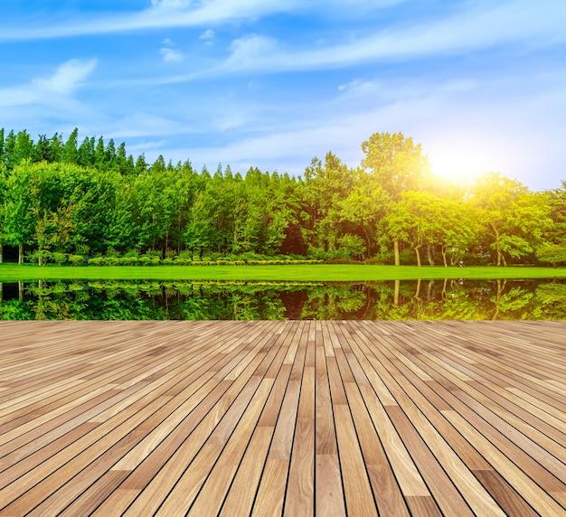 Verde frescura follaje caducifolio naturaleza Foto gratis