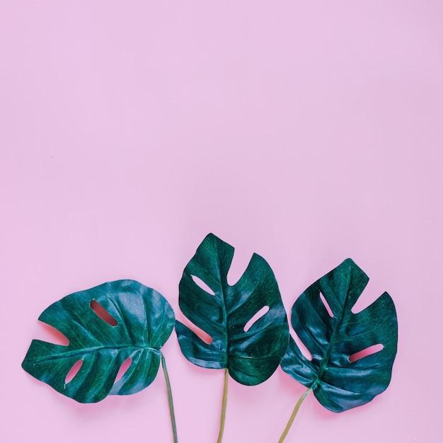 Verde hojas de palma sobre fondo de color rosa con espacio de copia ...