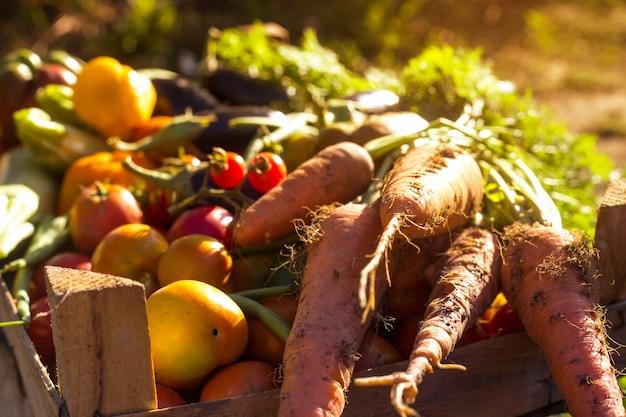 Verduras orgánicas del huerto familiar. Foto Premium