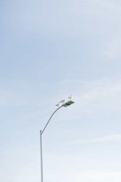 Vertical de las palomas sentado en una farola blanca con el cielo Foto gratis