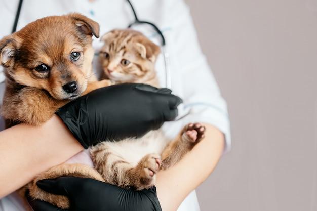 Veterinario en guantes negros con un perro y un gato en sus manos Foto Premium