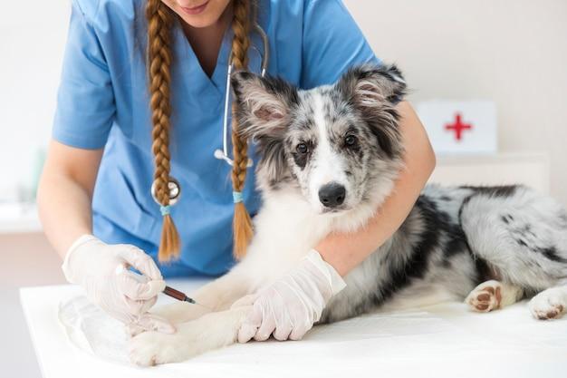 Veterinario de sexo femenino que da una inyección en la pierna del perro Foto gratis