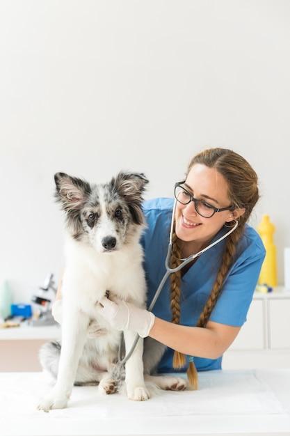 Veterinario de sexo femenino que examina el perro con el estetoscopio en la tabla en clínica Foto gratis