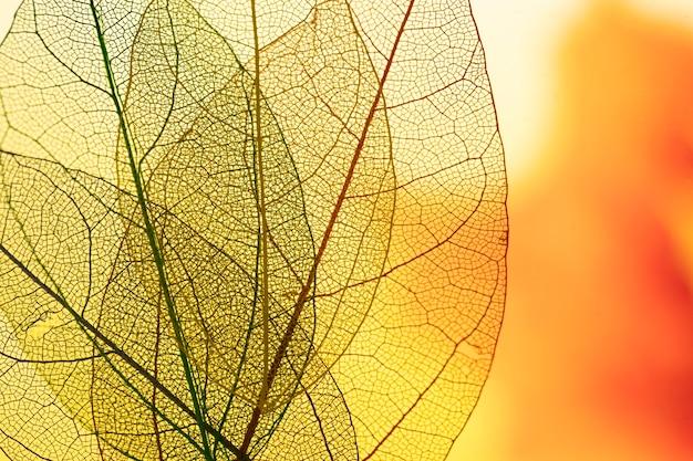 Vibrantes hojas de otoño de color amarillo Foto gratis