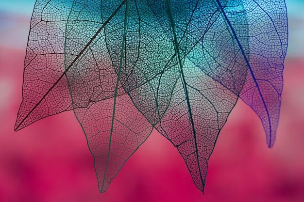 Vibrantes hojas de otoño de color azul Foto gratis