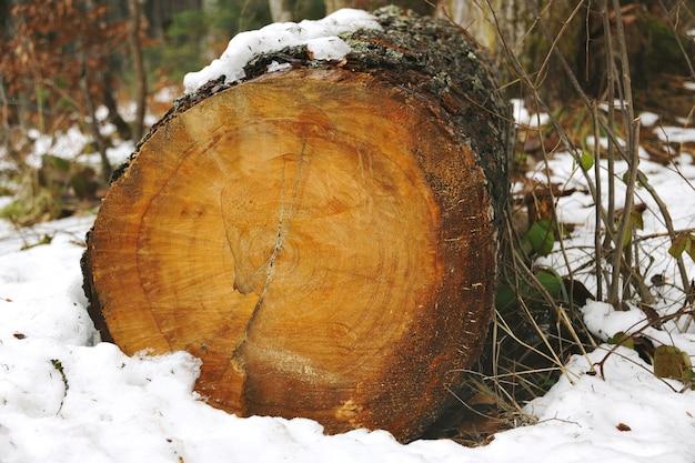 Viejo tronco cortado cubierto de musgo y nieve en el bosque de invierno Foto gratis