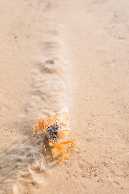 Una vista aérea de cangrejo sobre arena mojada Foto gratis