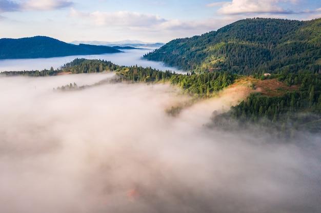 Vista aérea del colorido bosque mixto envuelto en la niebla de la mañana en un hermoso día de otoño Foto gratis