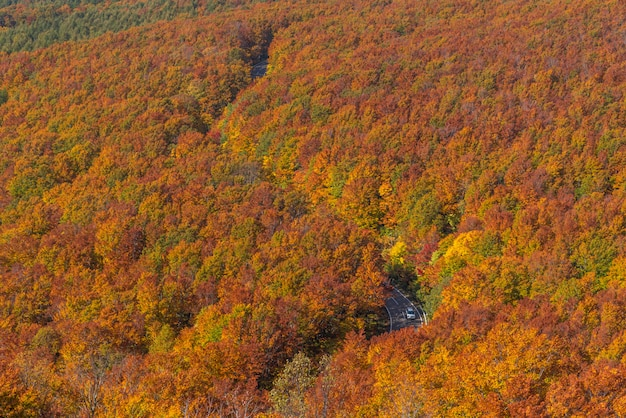 Vista aérea otoño tohoku japón Foto Premium