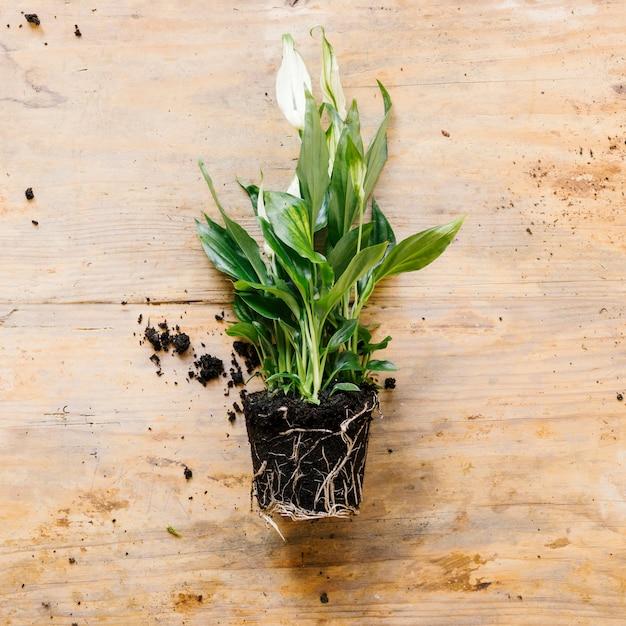 Vista aérea de la planta verde en el escritorio de madera Foto gratis