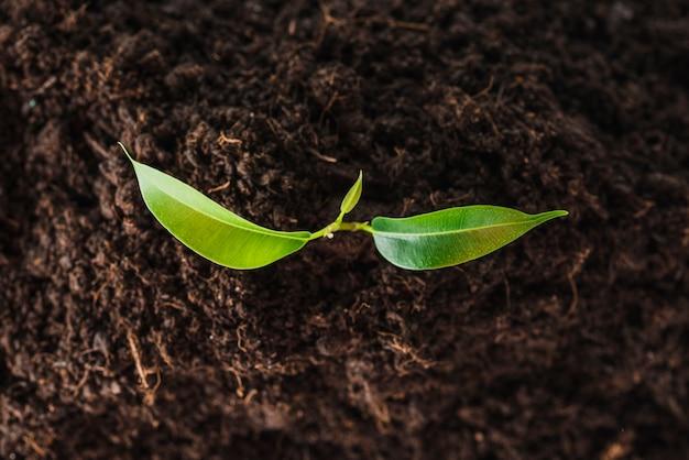 Vista aérea de las plántulas que crecen en el suelo. Foto gratis
