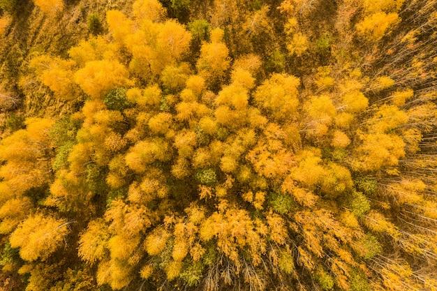 Vista aérea sobre un bosque en otoño Foto Premium