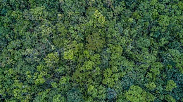 Vista aérea superior del bosque, Foto Premium