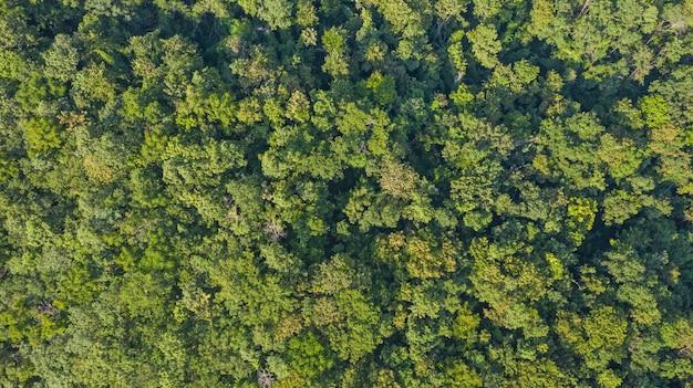 Vista aérea superior del bosque Foto Premium