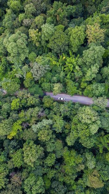 Vista aérea superior coche conduciendo por el bosque en country road, vista desde drone Foto Premium