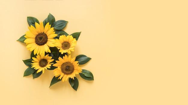 Vista de ángulo alto de girasoles hermosos en superficie amarilla Foto gratis
