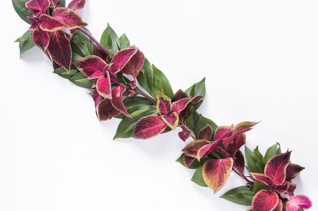 Vista de ángulo alto de hojas rosadas y verdes sobre fondo blanco Foto gratis