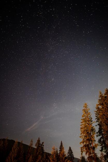 Vista baja tiro de árboles en la noche Foto gratis