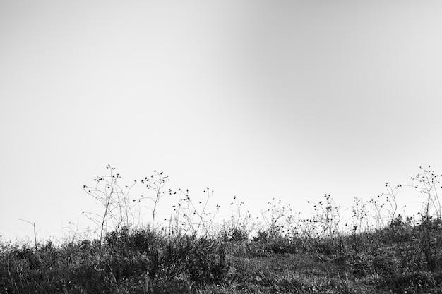 Vista en blanco y negro del paisaje. Foto gratis