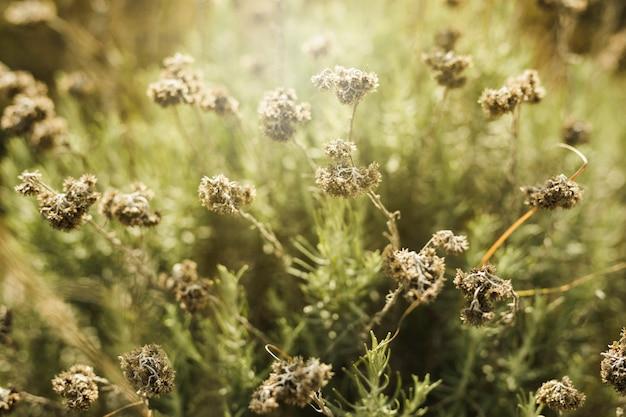 Vista del campo de flores secas. Foto gratis