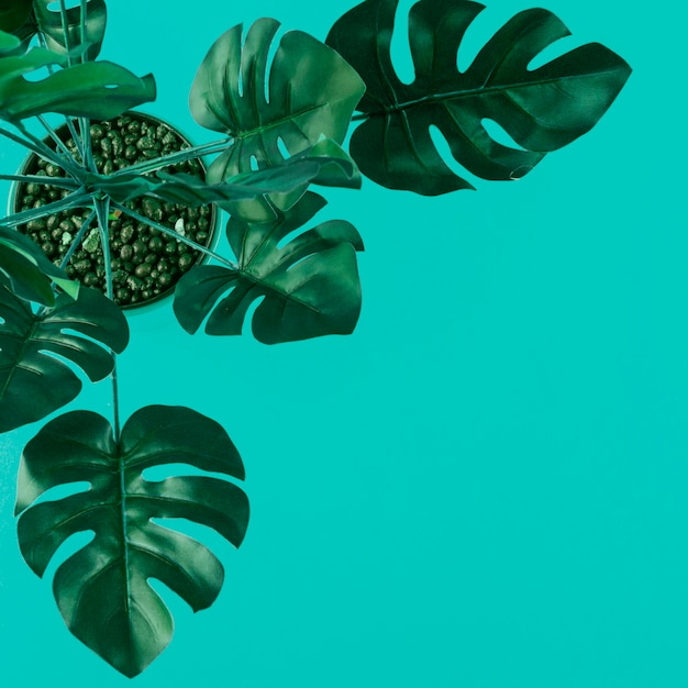 Una vista elevada de monstera artificial verde se va en el fondo coloreado Foto gratis