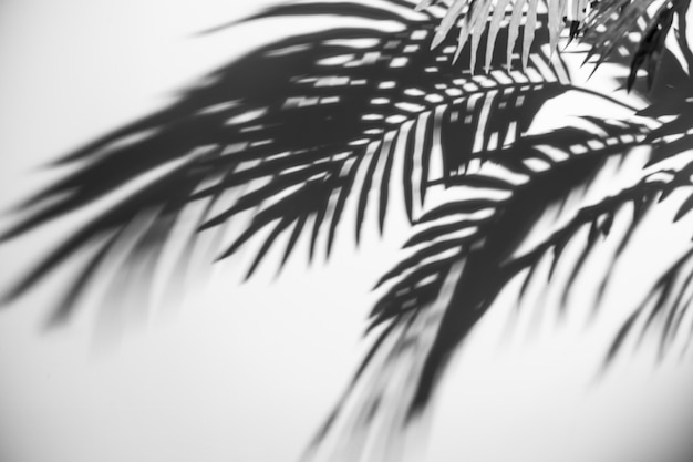 Una vista elevada de la sombra de hojas de palma oscura sobre fondo blanco Foto gratis
