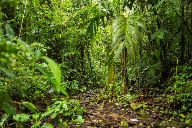Vista de la exuberante selva tropical en costa rica Foto Premium