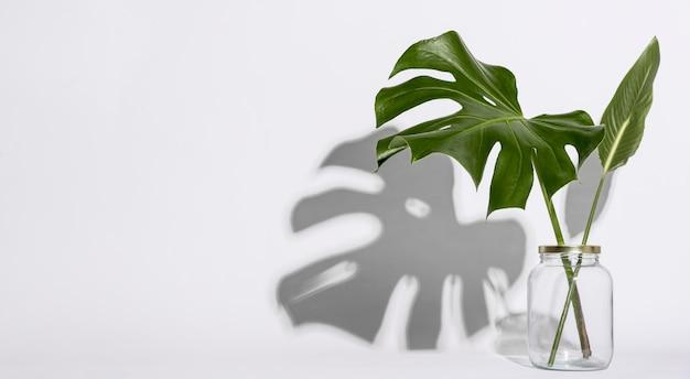 Vista frontal concepto botánico con espacio de copia Foto Premium