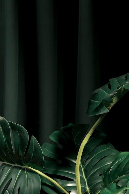 Vista frontal de las hojas de monstera con fondo oscuro. Foto gratis