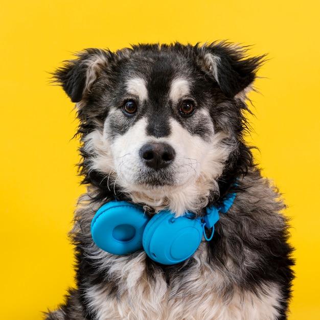 Vista frontal lindo perro con auriculares Foto gratis