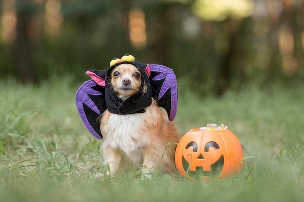 Vista frontal del lindo perro disfrazado de murciélago Foto Premium