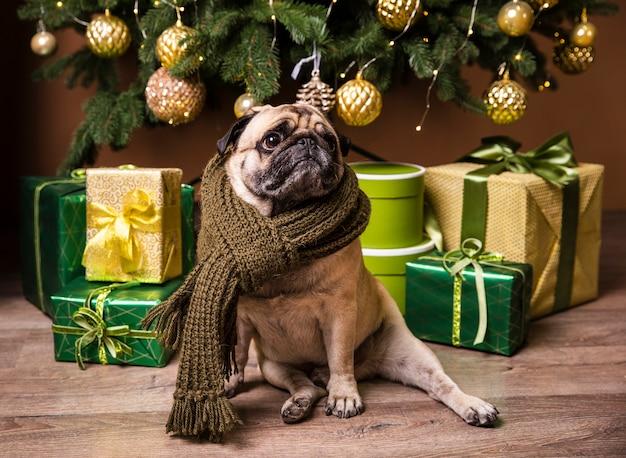 Vista frontal lindo perro parado frente a regalos Foto gratis