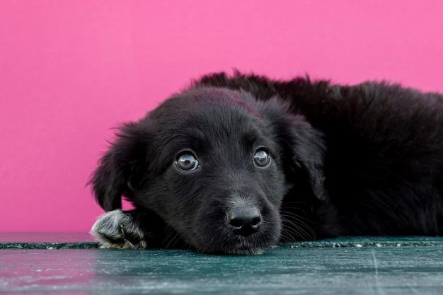 Vista frontal lindo perro sentado en el piso Foto gratis