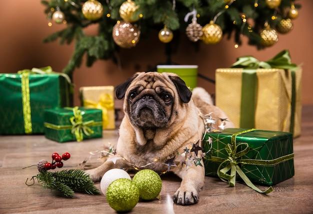 Vista frontal perro doméstico viendo regalos de navidad Foto gratis
