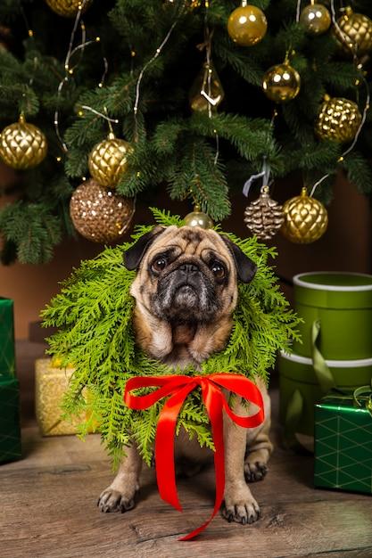 Vista frontal del perro junto al árbol de navidad Foto gratis