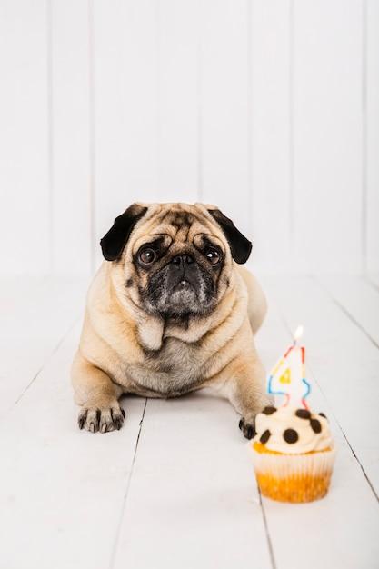 Vista frontal de perro y pastel para su celebración del cuarto año Foto gratis