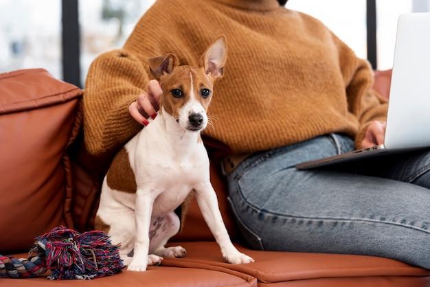 Vista frontal del perro en el sofá con dueño Foto gratis