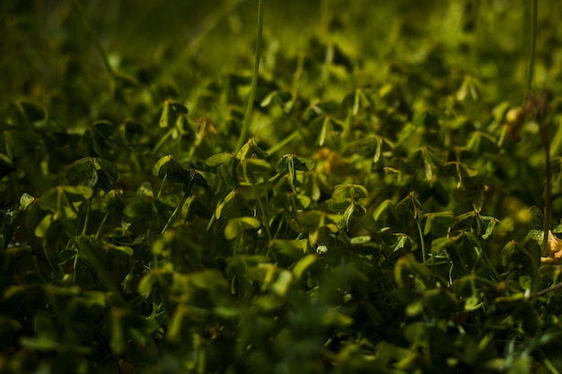 Vista de hojas verdes en el fondo Foto gratis