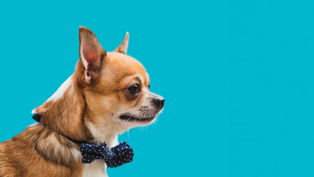 Vista lateral amigable perro con arco azul espacio de copia Foto gratis
